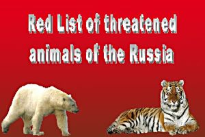 Red List of threatened animals of the Russia